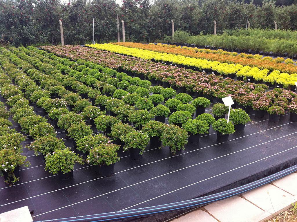 Питомники рассады и растений 121